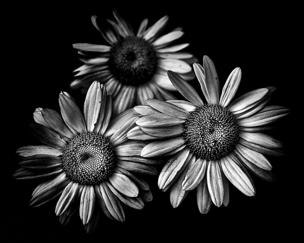 Photography 101 light and shadow in black and white photography